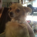 Princess Santerre all blinged out!