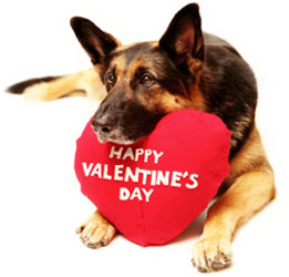 Style unleashed pet boutique and grooming salon - Valentines day pictures with puppies ...